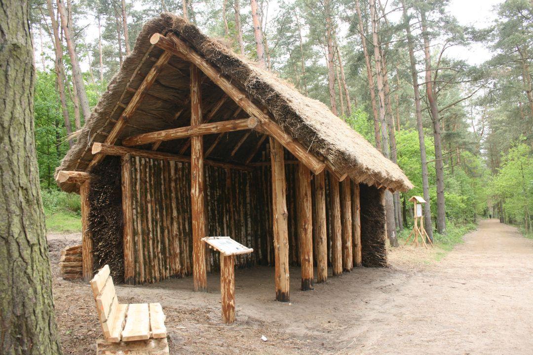 001_o_rzucewskim_lesie