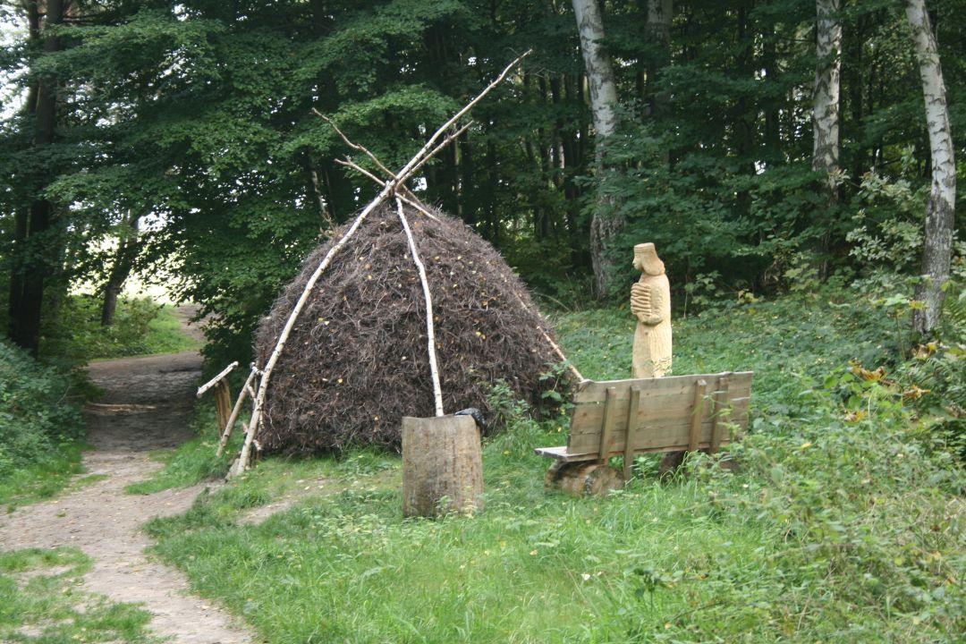 005_o_rzucewskim_lesie