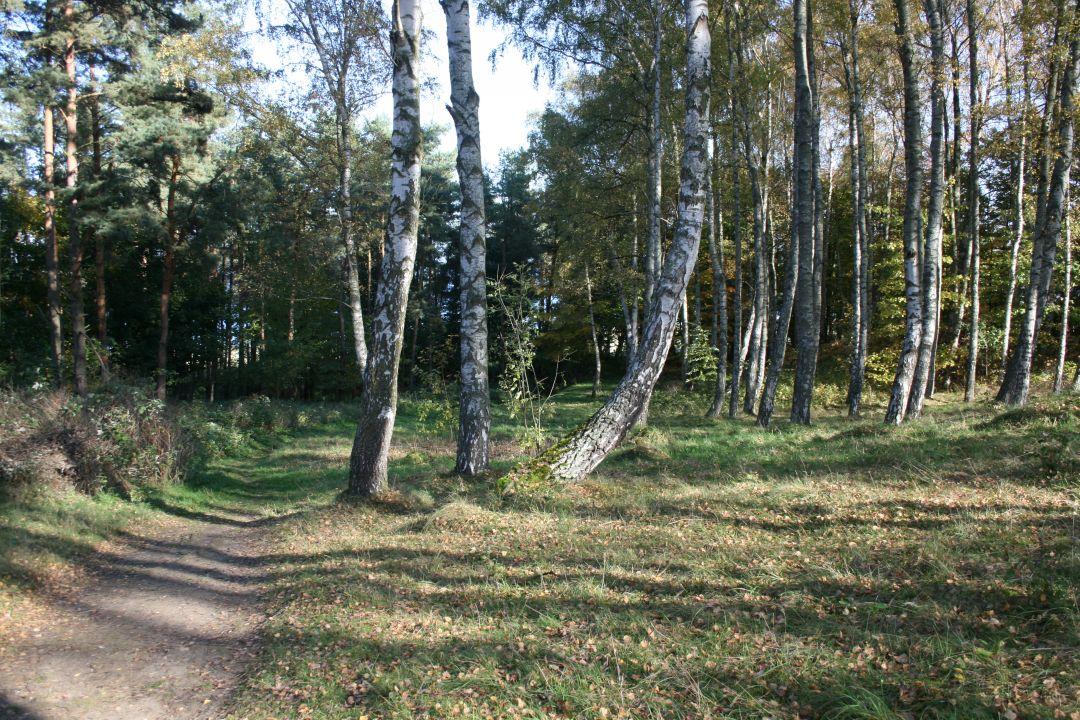 010_o_rzucewskim_lesie